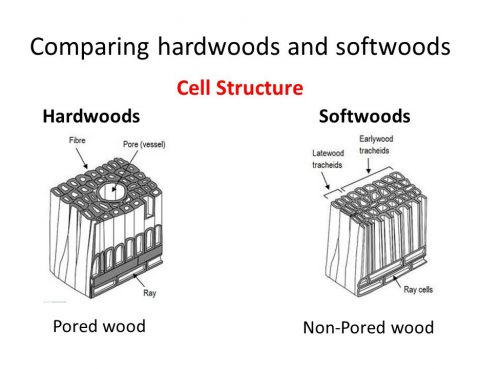 Compare Hardwoods and Softwoods