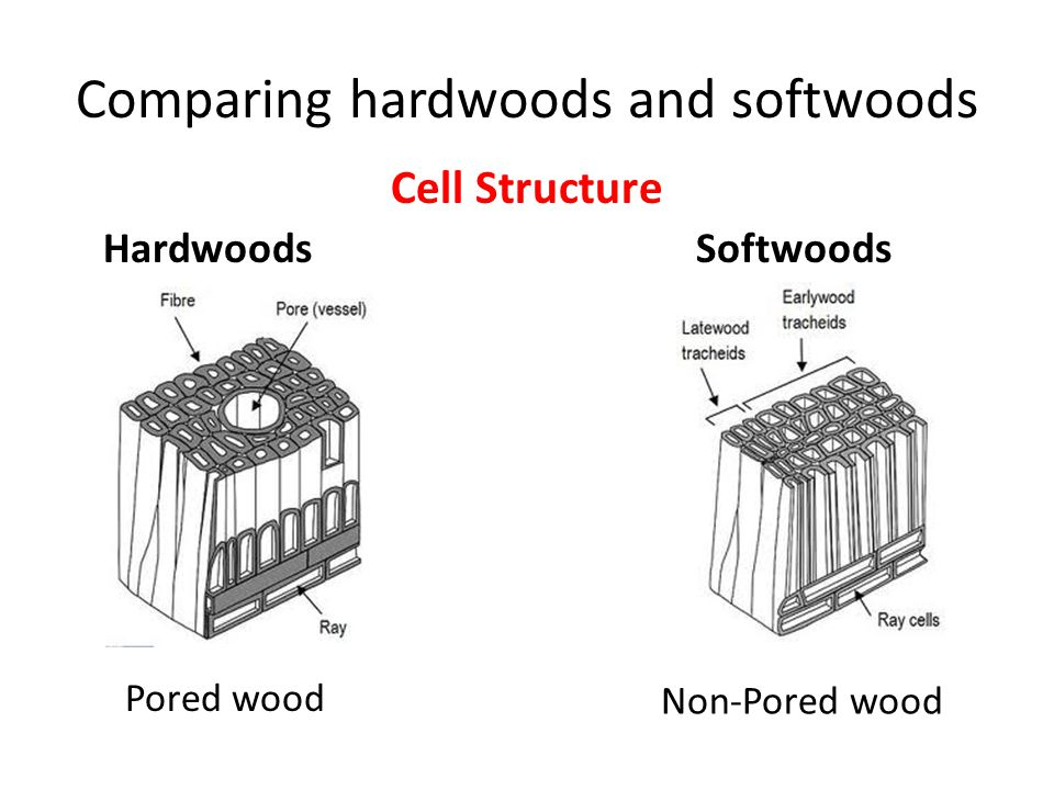 Difference Between Hardwoods Softwoods And Modified Timber