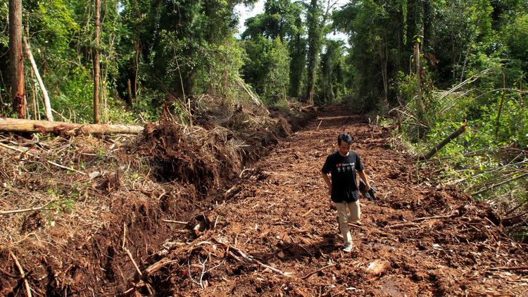 Status of forests is 'dire' as world marks 2017 Earth Day (WWF) Andrew Goto