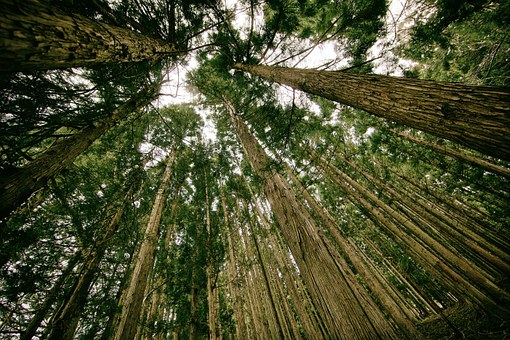 What is Chain of Custody (CoC) of Forest Products Certification ? Andrew Goto